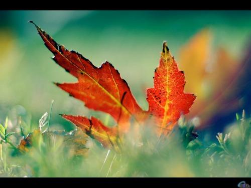 nature_834.jpg