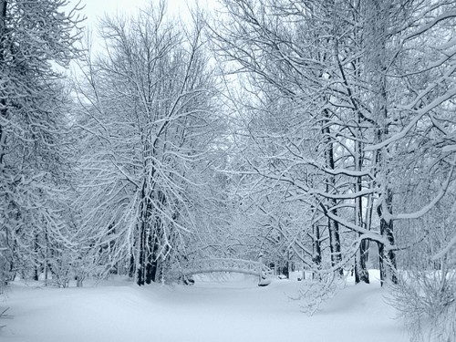 snow-blanket-1024.jpg